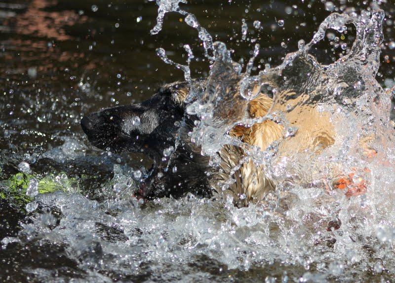 Haru, Pii ja vesiäiset 158